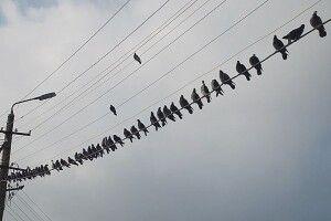 Чому птах, що сидить на проводі, не гине від удару струмом?