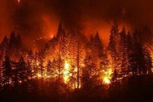 На Волині, поблизу села Столинські Смоляри, продовжує лютувати страхітлива лісова пожежа (фото, відео)
