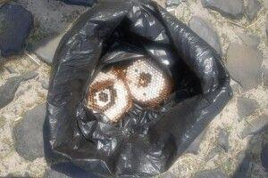 Селянин на Рівненщині знайшов під підлогою будинку гніздо шершнів (Фото)