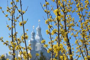 З тепла весняного все оживає... і гуде (Фотонарис)