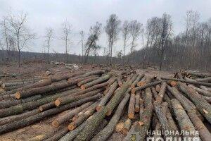 Волинські слідчі підозрюють, що підприємець незаконно зрізав 184 дерева у Національному парку (Відео)