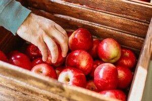Сумнівний рекорд: Україна скуповує яблука за кордоном