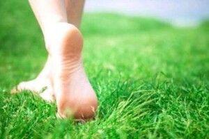 Босоніж по килиму зі споришу…