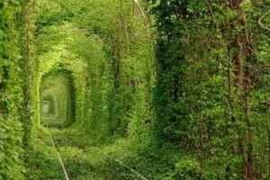 Тунель кохання очолив рейтинг найбільш романтичних маловідомих місць у світі за версією британського Daily Mail