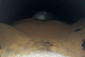 Украв 4 тонни зерна, аби дружина не сердилася!