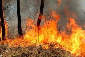 У частині областей оголошено надзвичайний рівень пожежної небезпеки