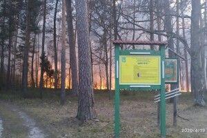 Голова ОТГ Володимир Крижук про страхітливу лісову пожежу, яка трапилася у Любомльському районі на Великдень: «Мав місце підпал відразу з декількох місць…» (Фото)