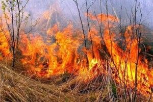 Спалював суху траву і загинув