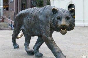 Поліція ловила тигра зізброєю йгелікоптером. Виявилось, цескульптура