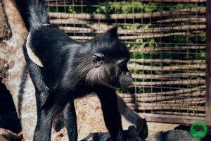 Директорка Луцького зоопарку розповіла причину пожежі, внаслідок якої загинули мавпочки