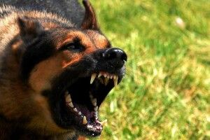 Житель Мелітополя спустив свого пса на поліцейських: штани лейтенанта та старшого сержанта ремонту не підлягають