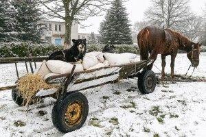 На небеснім зодіаку вже надходить рік Собаки