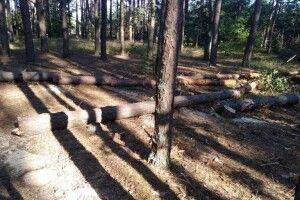 На Волині затримали і зазнімкували крадіїв лісу (Фото)