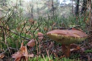 Який він восени – лютківський ліс на Волині (Фото)