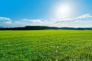 Громаді на Волині можуть повернути земелю вартістю 80 мільйонів гривень