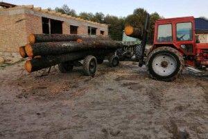 Сліди з місця самовільної рубки лісу привели до приватного будинку на Ківерцівщині