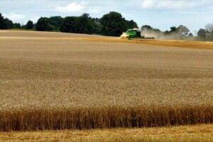 Господарників Волині заохочують сіяти озиме жито