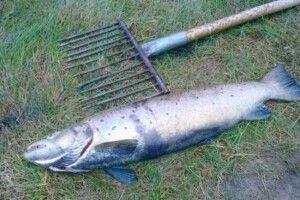 Під Пожарками впіймали двох дядьків, які посеред ночі кололи рибу острогою