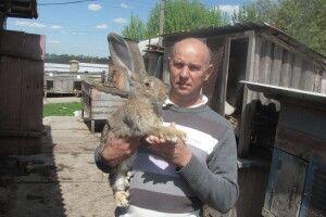 Знайте: ворог кролів — капуста