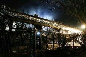 Трагедія у новорічну ніч: під час пожежі в зоопарку загинуло багато тварин