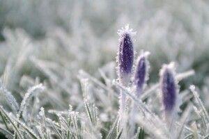 Погода на п'ятницю, 23 квітня: нічні заморозки на Волині стануть ще міцнішими