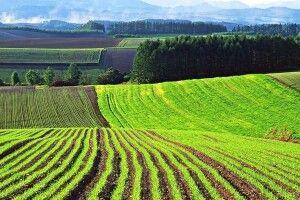 Волинські громади отримають у власність 65 тис га сільгоспземель