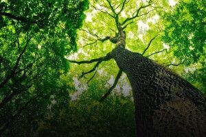На Волині створено 12 гектарів нових лісів