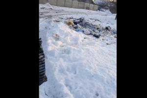 У Луцьку затримали «на гарячому» «сміттєву зозулю» (Відео)