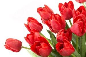Вибираємо квіти на подарунок