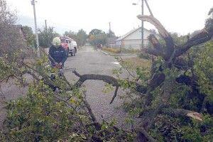Буревій поламав дерева, позривав дахи ізнеструмив десятки сіл