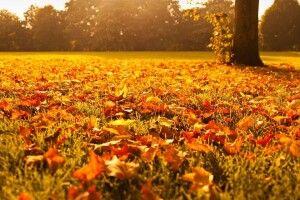 Погода на неділю: листопад негоди не принесе