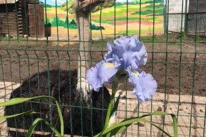 У Луцькому зоопарку – ірисоцвітна пора (Фото)