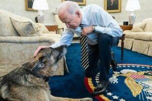Джо Байден втратив пса Чемпа, який був поруч впродовж 13 років