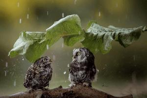 Погода на п'ятницю, 2 жовтня: знову дощитиме, але вже менше