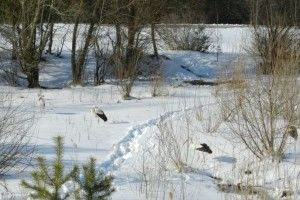 Замість сонця і тепла лелек зустріли сніг і холод