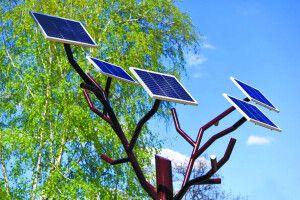 Українські студенти винайшли «сонячне дерево»