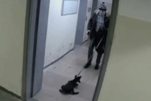 У Києві чоловік побив і викинув на мороз цуценя (Відео 18+)