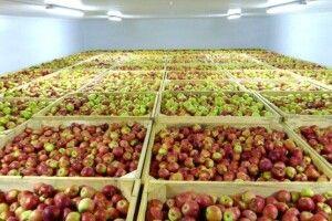 Фермери змушені викидати продукцію через дефіцит сховищ та переробки