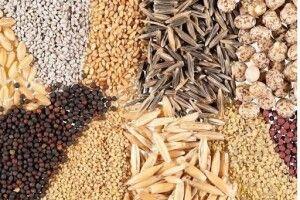 З 28 березня на Волині запрацювали заклади, що торгують насінням