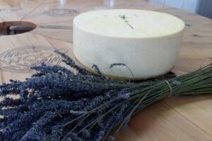На Закарпатті варять «лавандовий» сир