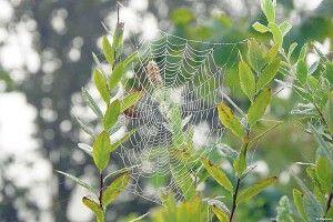 Перший павутиновий ранок цієї осені