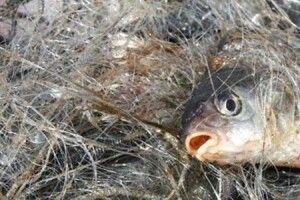 На Волині у заказнику «Оріхівський» викрито рибних браконьєрів із забороненими сітками