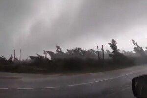 Туристи зняли, як потужний ураган виривав десятки дерев в Білорусі (Відео)