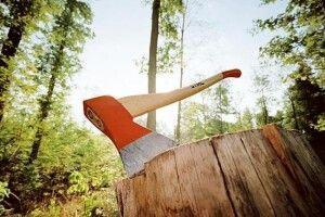 На Волині оштрафували двох працівників лісового господарства