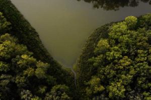 Показали вражаючий проморолик про волинський ліс (відео)