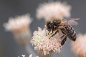 В Україні вперше запроваджується підтримка бджільництва