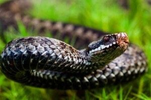 Підлітка вкусила змія під час підйому на Говерлу