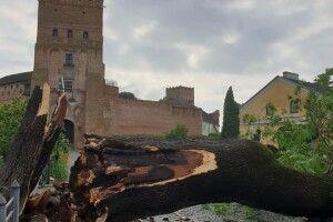 Лучанин пропонує на місці поваленого буревієм «Лесиного ясена» створити пам'ятник «Лесин пень»