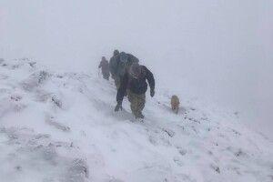 У люту заметіль чотирилапий гід вивів волинян аж на Говерлу (Фото)