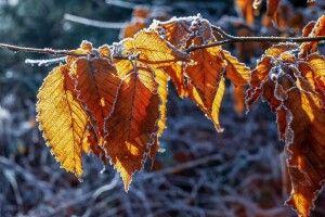 До України йдуть заморозки: в яких регіонах очікувати мінусову температуру